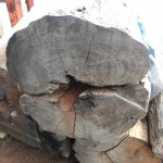 アフリカ黒檀の原木丸太